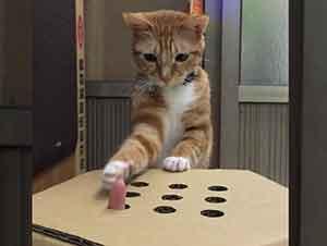 Gato y su dueño se divierten jugando con una caja y con sus dedos.