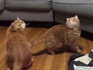 Gatos confundidos por burbujas