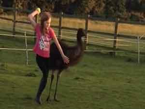 Una ave gigante llamada Emu juega a la pelota!