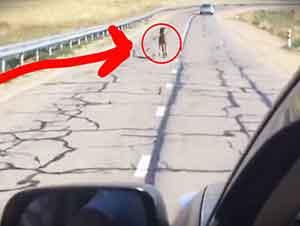 Rescate de un pequeño potro en la carretera