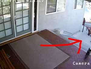 Un pequeño perro bulldog persigue y saca a dos osos de su casa!