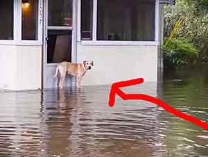 Perro es rescatado de las inundaciones fuera de una casa.