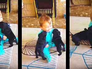 Bebé y sus cachorros pug te haran tu dia!