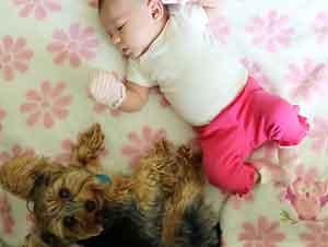 Pequeño cachorro conoce a una bebita por primera vez