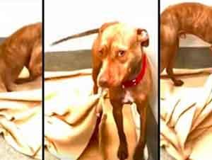 Perro sin hogar busca una familia y hace su cama todas las mañanas.