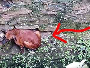 Perro callejero se cae a un pozo de agua