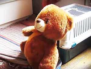 Cachorro determinado a meter a un oso en su jaula!