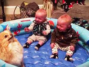 Gemelos bebes y su perro te harán tu día!