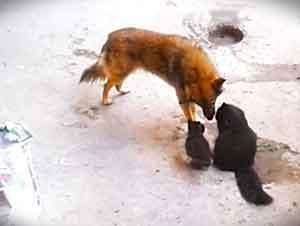 Una gatita lleva a sus crías a visitar a su viejo amigo.