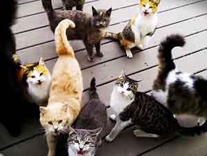 Gatos callejeros piden de desayunar.