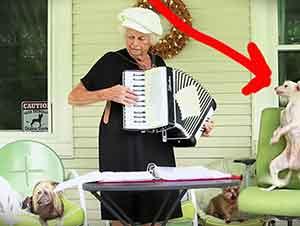 Perro baila mientras su dueña toca la acordeon.