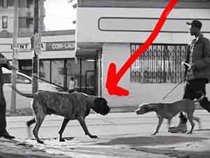 Total de Outlook del hombre ha cambiado – Todo porque anduvo su perro!
