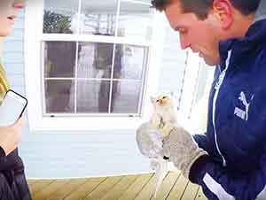 Gatito congelado es rescatado de entre la nieve.