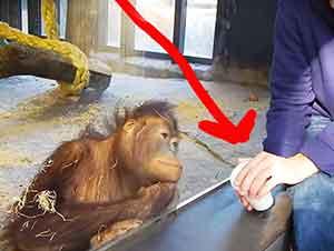 Reacción de un orangután después de ver magia.