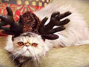 La navidad puede ser un tiempo de mucho estrés para los gatos.