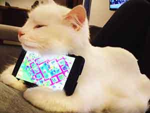 Hermoso Gato Ayuda A Su Dueño Con El Celular