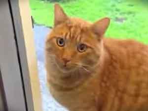 Gato Sabe Que Hacer Para Que Lo Dejen Entrar A La Casa