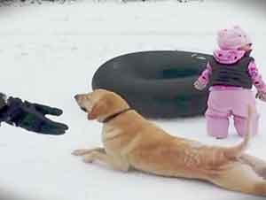 Perro se arrastra por la nieve en frente de la camara