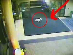 Mascota Leal Visita A Su Dueño En El Hospital.