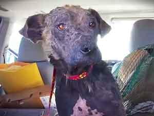 Perros reciben una segunda oportunidad para tener un hogar.