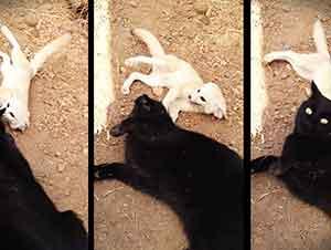 Zorrito y gato son mejores amigos.