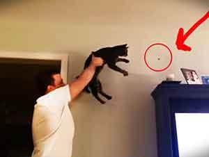 Gato y su dueño trabajan en equipo para atrapar a un insecto.