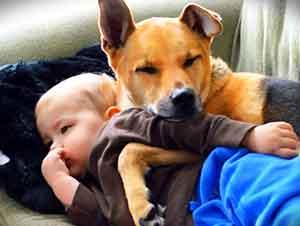 Perro Se Encarga De Cuidar A Un Niño Que Se Siente Enfermo