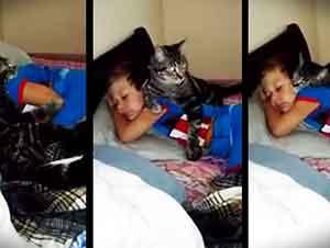 Gato Le Da La Bienvenida A Su Mejor Amigo
