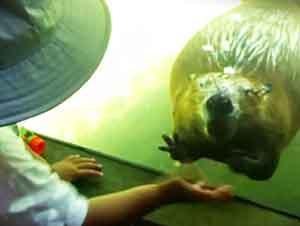 Castor Y Niño Juegan En El Zoológico