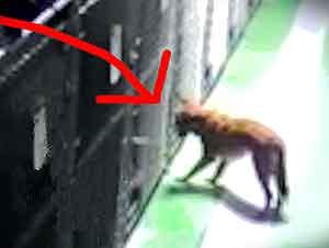 Perrita Escapa De Su Jaula Para Cuidar A Otros Cachorros
