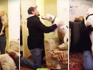Perro Recibe A Su Dueño Con Muchas Ganas