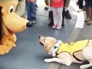 Perro De Cuidado Conoce a Pluto