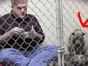 Veterinario Bondadoso Rescata A Perro Asustado