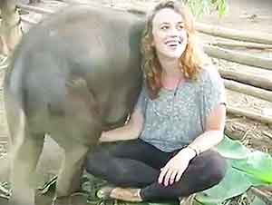 Elefantes Bebés Se Creen Perros De Compañía!