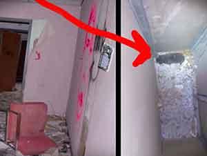Fotógrafo Encuentra Un Gatito En Un Hospital Abandonado