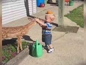 Bebé Y Venado Se Conocen Y Juegan En El Patio