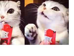 Pequeño Gato Comiendo Te Dará Risa