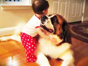 ¿Que Pasa La Primera Vez Que Una Bebita Ve Y Abraza A Un Enorme Perro? Mira Este Video Y Lo Sabrás