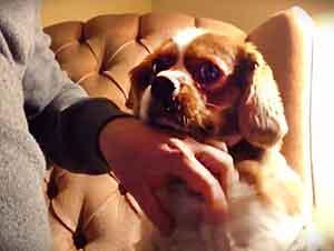 Aparentemente Este Cachorro Le Encanta Tener La Atención De Todos Y Lo Que Hace Es Encantador