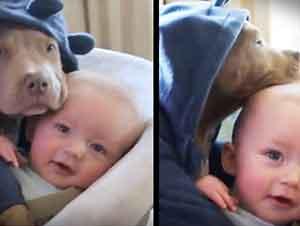 Cachorrito Y Bebé Juntos En Su Carreola