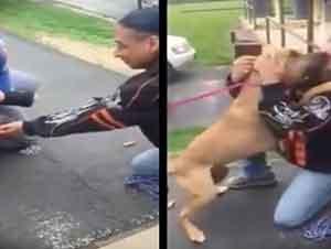 Emotivo Encuentro Entre Un Perro Y Su Dueño Después De Dos Años