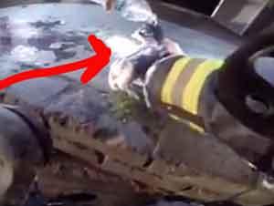 Bomberos Rescatan A Unos Gatitos En Un Rescate En Medio De Las Llamas