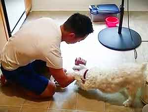 Cachorro Da Gracias Antes De Comer Su Cena