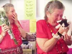 Estudiantes Regalan Un Gato A Su Maestra Como Sorpresa