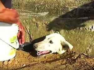 Rescatando A Una Perrita Atorada En Un Muro