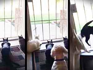 Gatos Son Espantados Por Un Perro Mientras Ven A Una Paloma