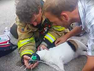Bomberos Rescatan A La MAscota De La Familia Durante Incendio