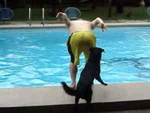 Travieso Cachorro Empuja A La Gente En La Alberca