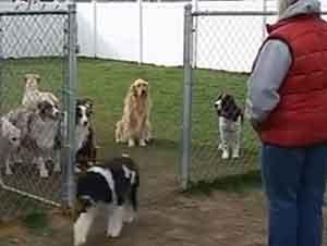 Grupo de Perros Esperan Su Turno Pacientemente