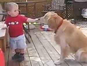 Bebé Y Perro Ciego Son Lo Mas Hermoso